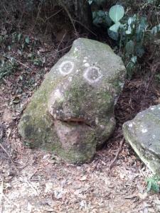 Brasiliansk troll