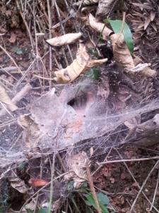 Edderkoppens hule